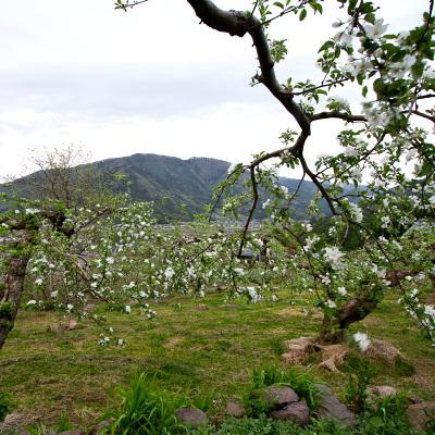 20100511b
