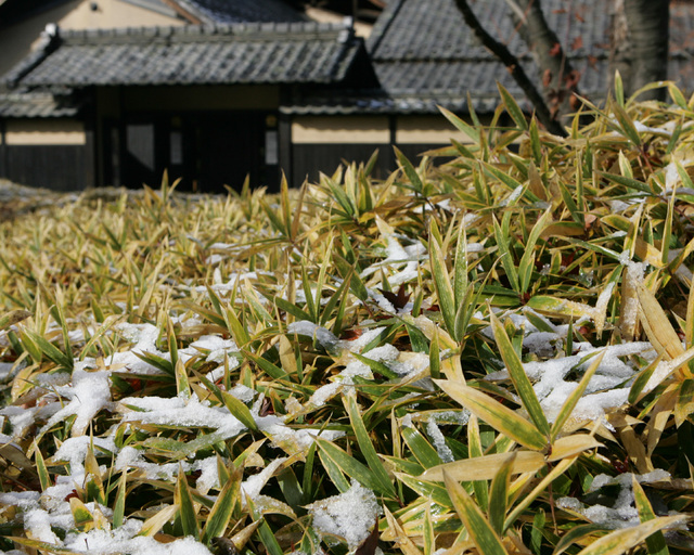 Sasayuki